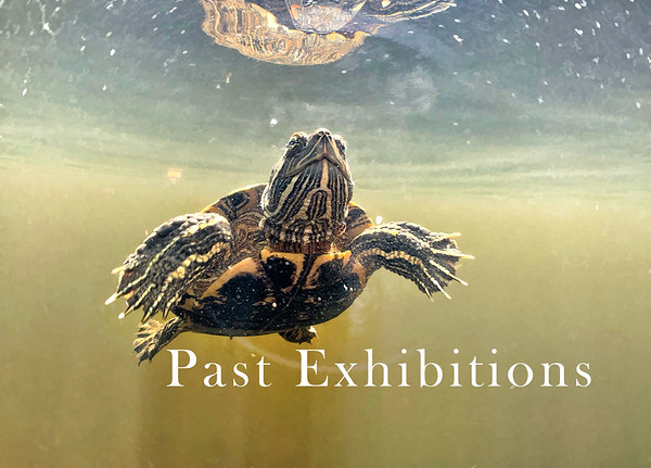 Past  Solo and Small Group Photography Exhibitions