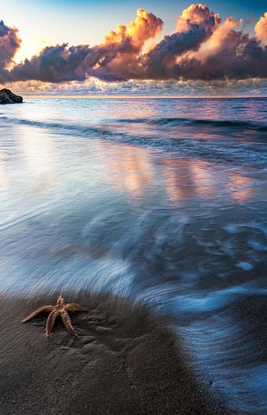 starfish_print.jpg