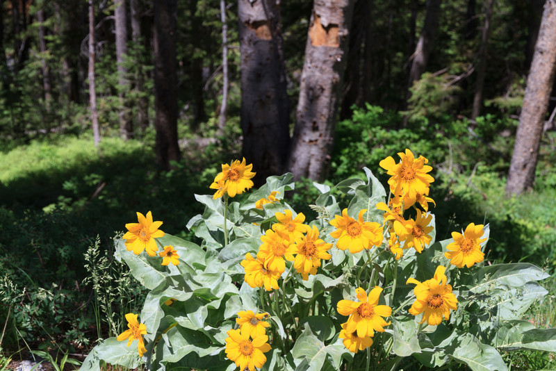 2011_07_06 Wyoming 127.jpg