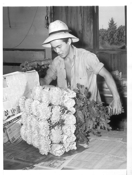 """""""Masato Yada (Nisei) wrapping flowers for delivery to wholesalers.  Many Japanese-Americans are found in the flower trade in Los Angeles.  They grow their own flowers and sell them on the market.""""--caption on photograph"""