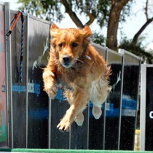 Eagle Canine Festival 2012