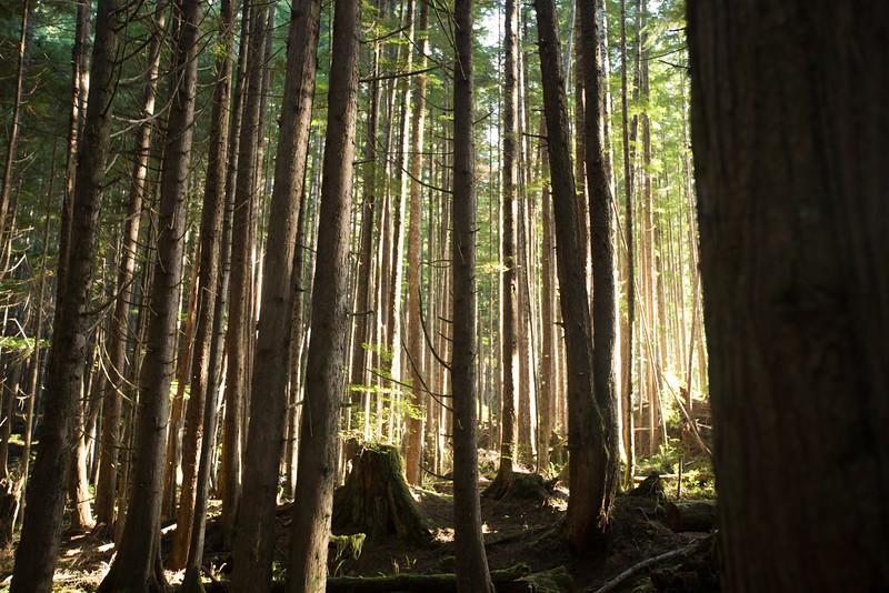 150913_Nikki_Forest_5647.jpg