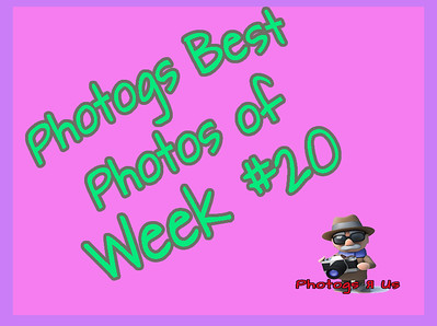 Photogs Best of the Week #20