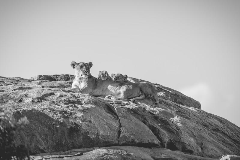 Tanzania_Feb_2018-765.jpg