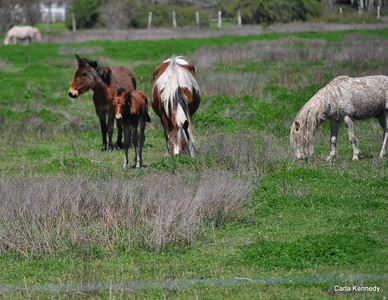 2015 03-19 Horses and Birds