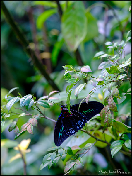 200104 KL Butterfly Park 16.jpg