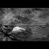 015-rock_ripples-wdsm-24apr11-9804
