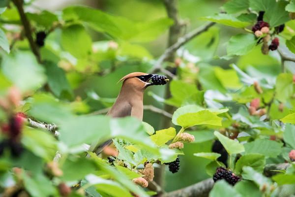 Birds Eating