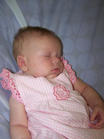 Henderson's Little Darlings 2009