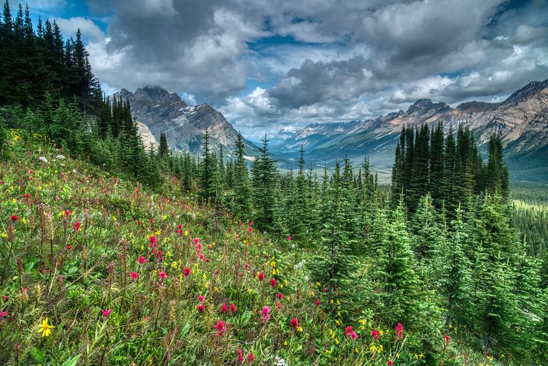 Banff NP 2019-25.jpg