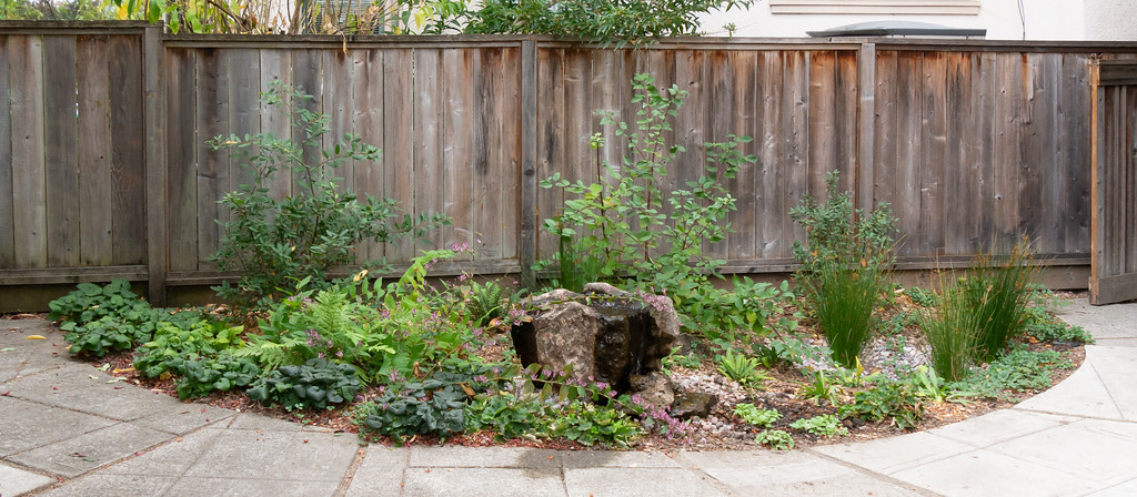 19 October 2017.  The grand sweep of the Fountain Bed as viewed dead-on from the patio.  The replanted area is between the fountain and the Juncus at the right.  Left center behind the fountain there's a new a sword fern too. (It replaces a Juncus.  I just like ferns more than rushes.)   Still, all of the changes represent a fraction of the total.  For the most part, the initial plantings worked out quite well.
