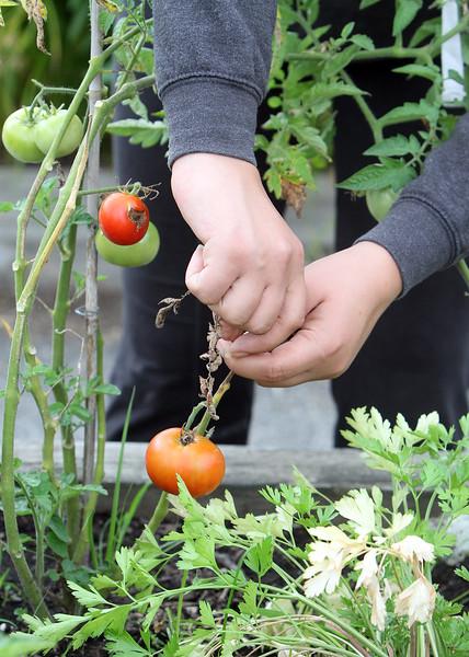 HART House vegetable garden