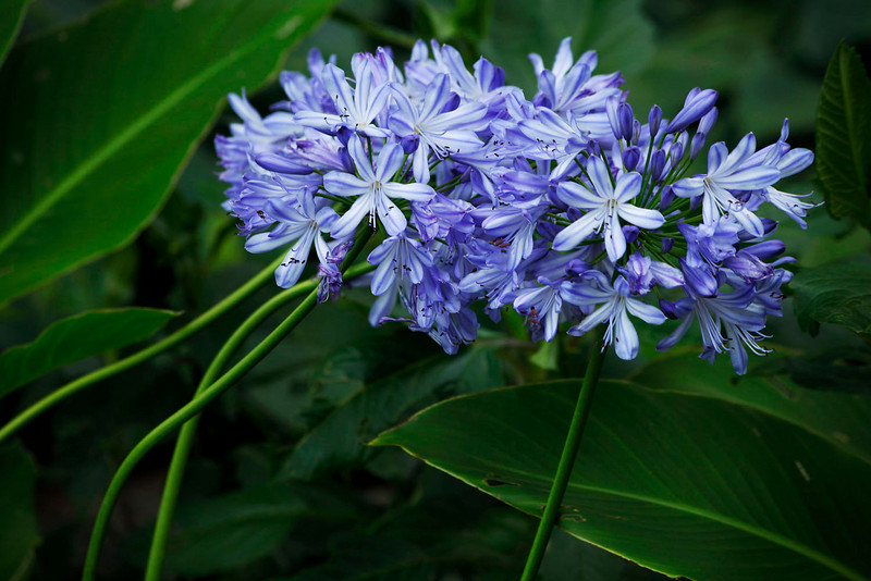 Graceful blue flowers