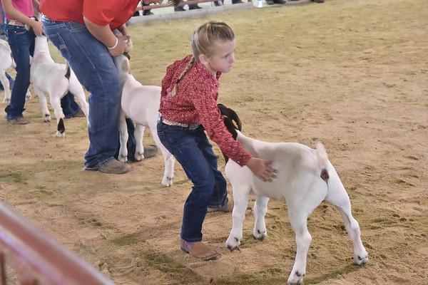 Lamb-Goat Futurity 8-22-18