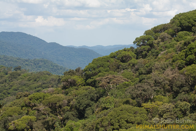 Atlantic forest lookout