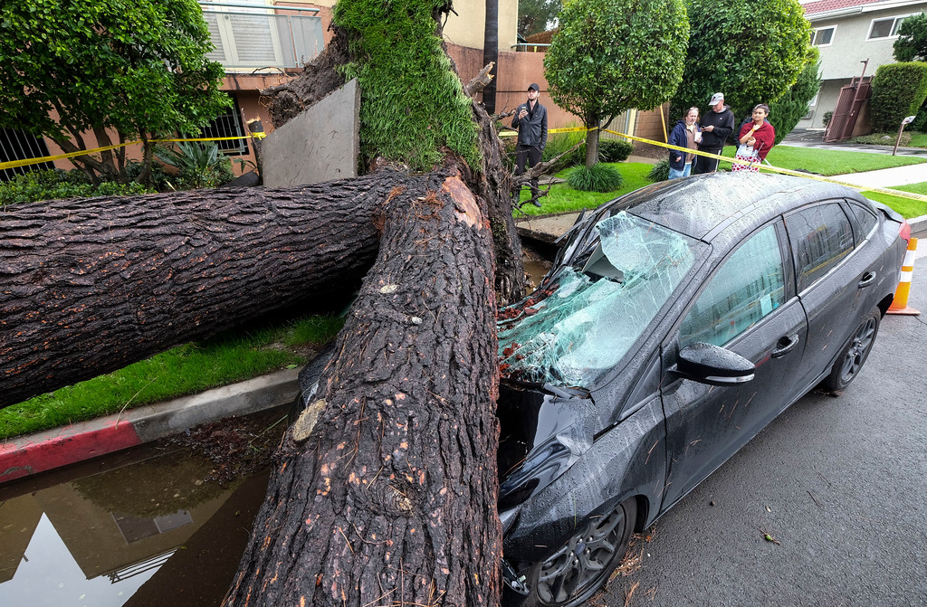 . A fallen tree crushes a car outside a residence on Saturday, Feb. 18, 2017, in Sherman Oaks section of Los Angeles.  A huge Pacific storm parked itself over Southern California and unloaded, ravaging roads and opening sinkholes.   (AP Photo/Ringo H.W. Chiu)