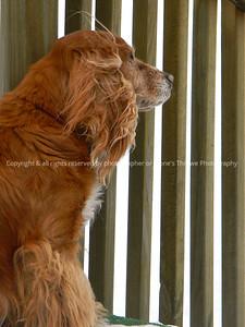 042-dog_mo-ankeny-03feb13-09x12-001-0556