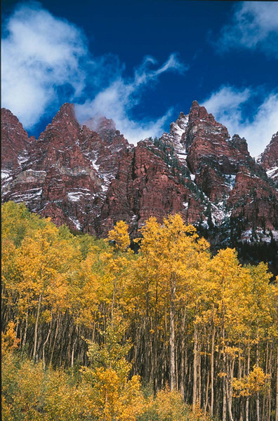 Aspens, Maroon Bells area, Colorado