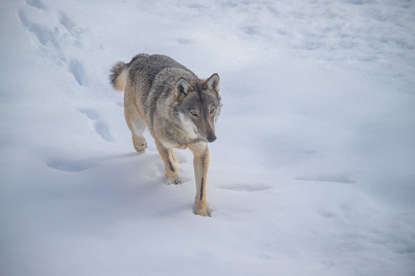 Winter ervaring in Nationaal Park Abruzzen