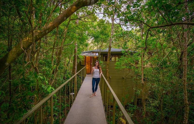 Hidden Canopy Treehouse