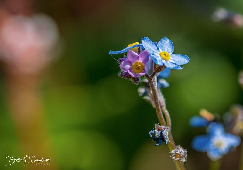 Spring Flowers-2804-Edit.jpg
