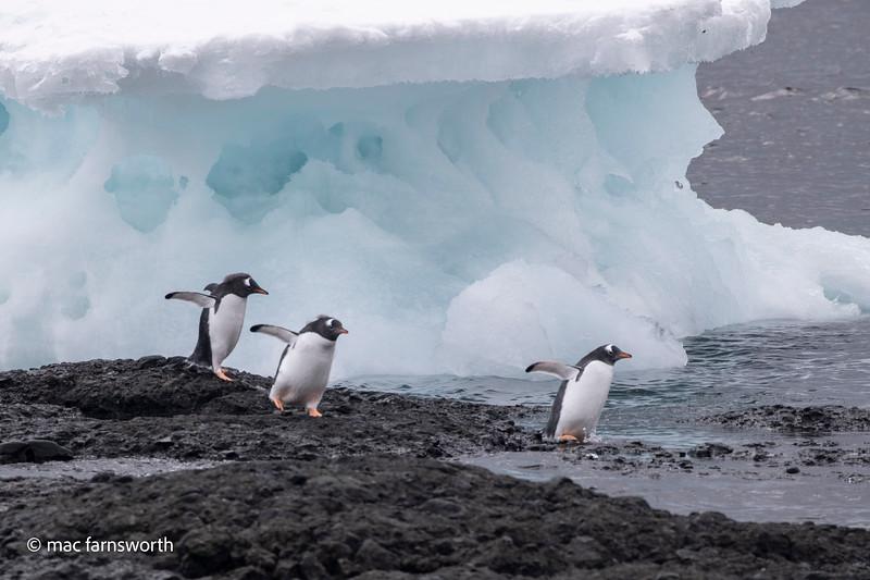 antartica-48.jpg