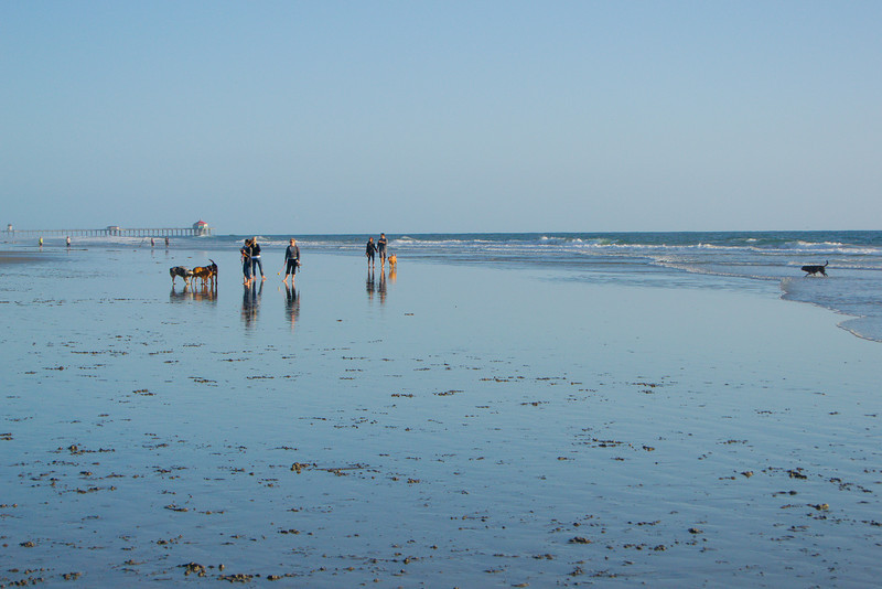 dogs_beach-40.jpg
