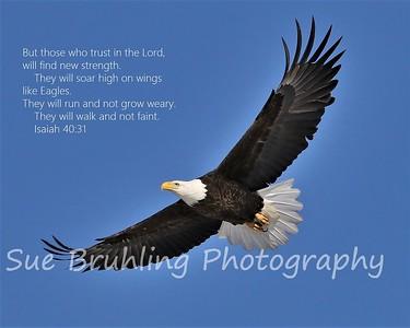 Eagle - Isaiah 40:31