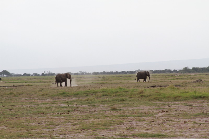 Kenya 2019 #2 328.JPG