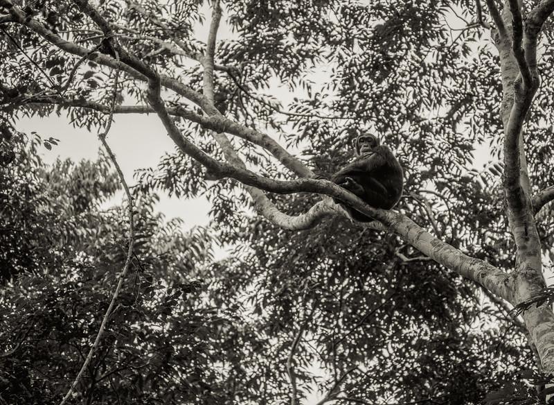 Uganda_T_Chimps-176.jpg