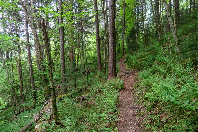 Mountains-to-Sea Trail -- 5,200'