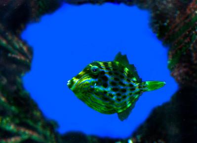 Denizens of the sea