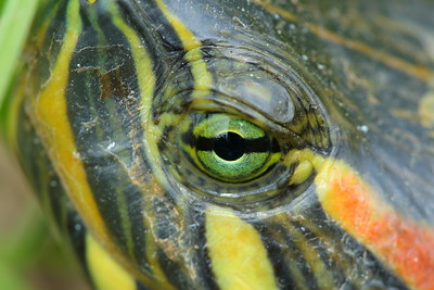 Herps (Reptiles & Amphibians)