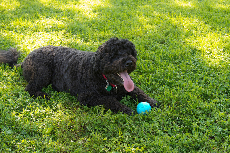 What can I say? Charlie and his beloved blue squeeky ball
