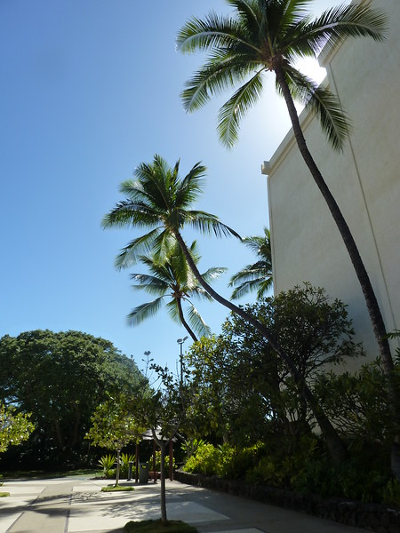 Hawaii 2017 079.JPG