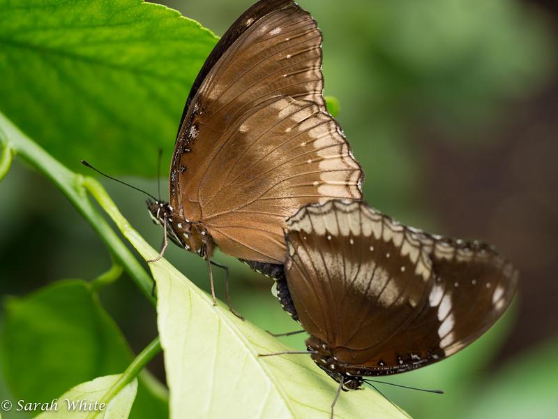 140503_ButterflyHouse_320.jpg