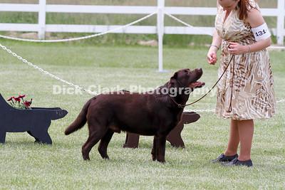 Saturday Winners Dog