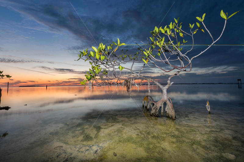 mangrove FIX  hidden beach.jpg