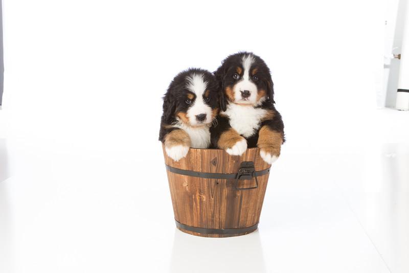 2013-Pearson Pups-Jun02-0469.jpg