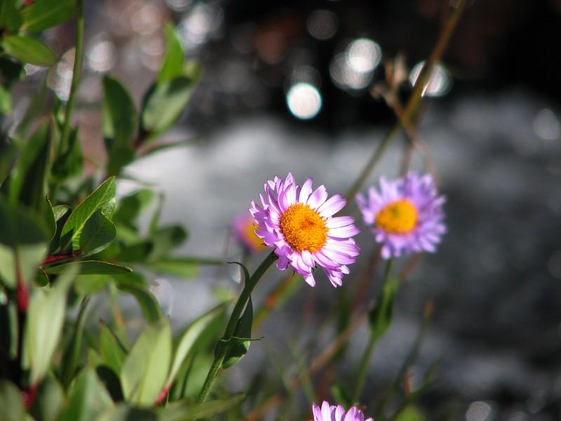 amh FLOWERS (1281).jpg