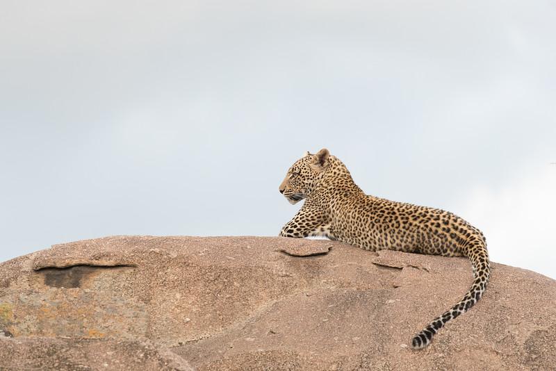 Africa  - 101016- 121-Edit.jpg