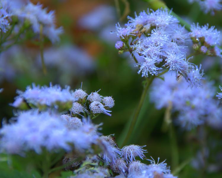 Blue Flower #2.jpg