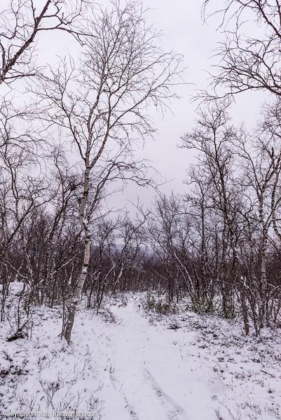 Nov.11_Utsjoki-6105851.jpg