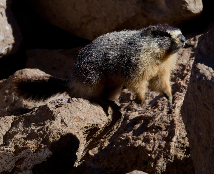 Marmot Upper Gorge   Mammoth Lakes 2014 03 22-3.jpg
