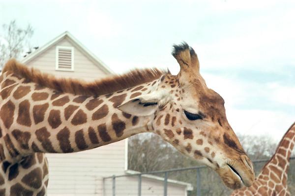 Houston Zoo, Circus and Wildlife Parks