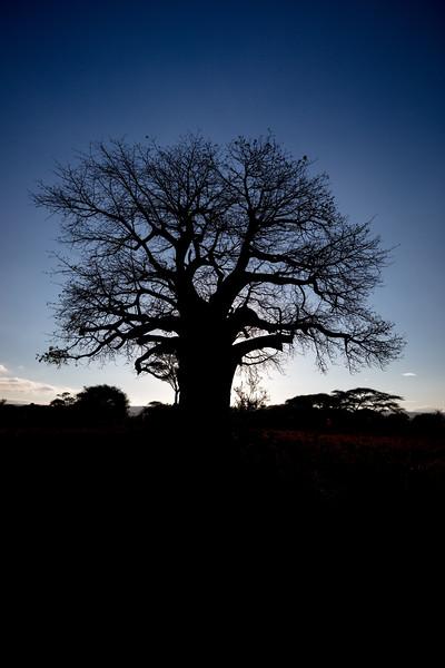 Africa - 102116 - 8061.jpg