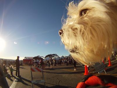 02/13/11 HWAC Puppy Love 5K