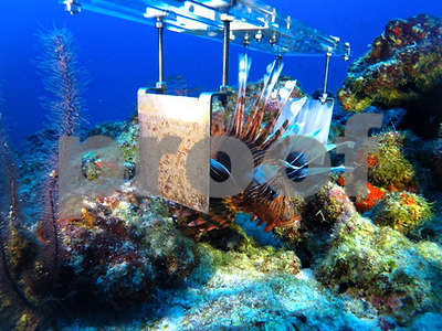 killer-robots-the-latest-weapon-in-the-futile-fight-to-destroy-the-invasive-lionfish