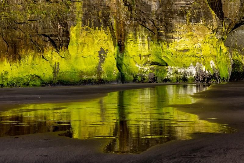 Spiegelung grüner Algen