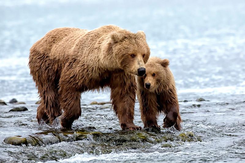 Alaska_2013_IG3A4210.jpg